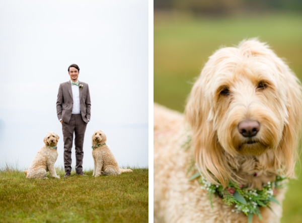 dogs lakefront wedding