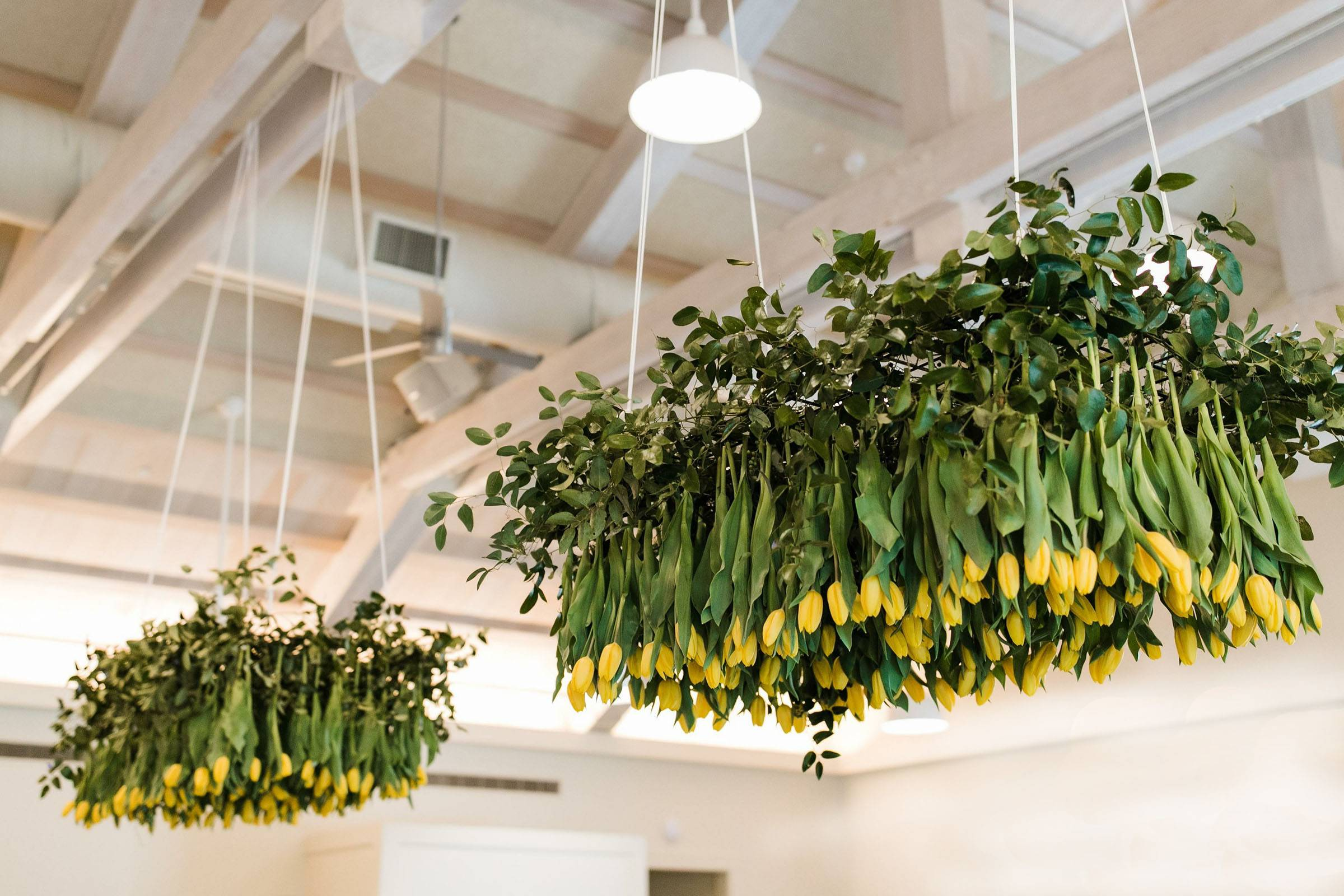 hanging yellow tulips