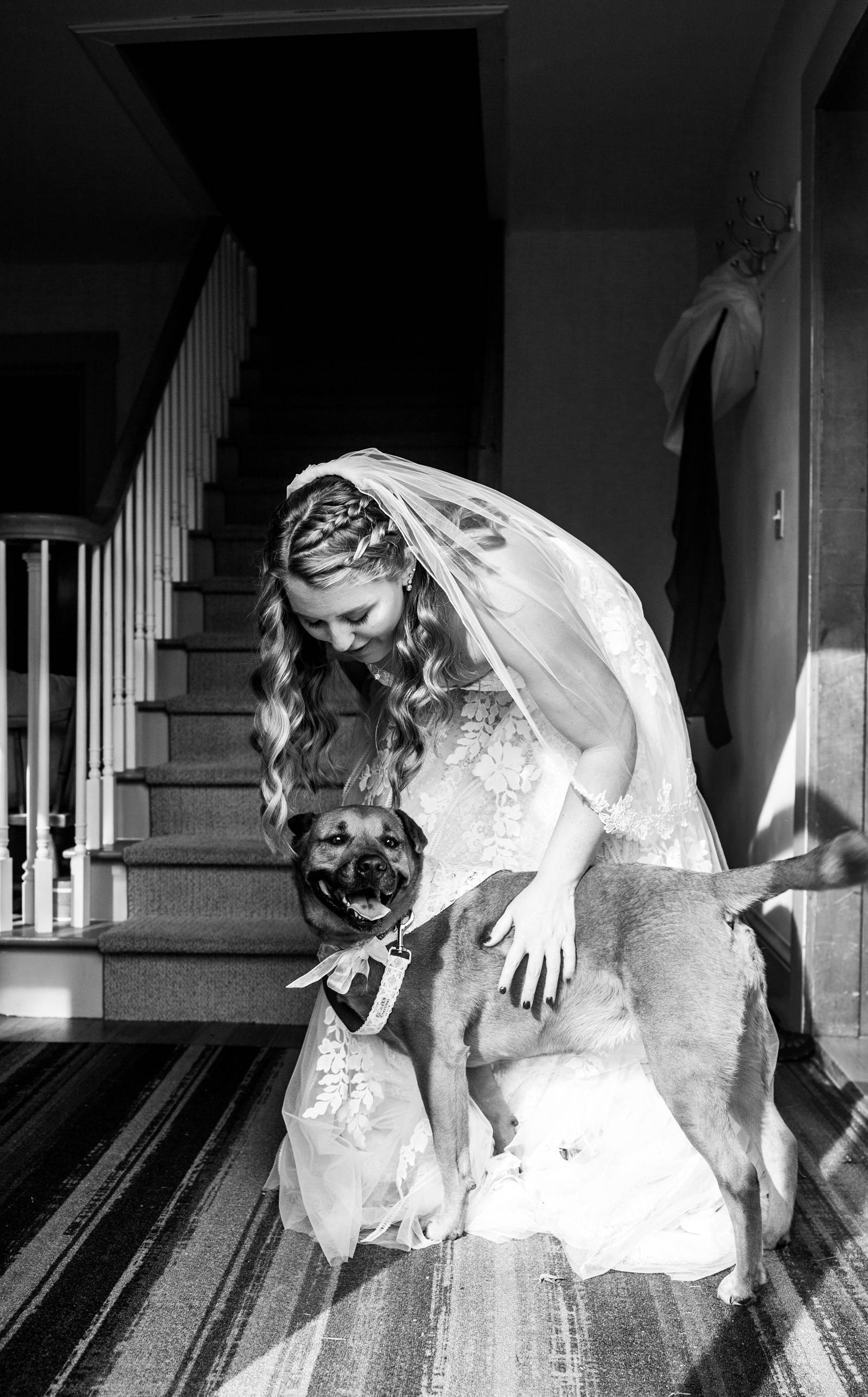 Black and white portrait of bride with her dog on wedding day