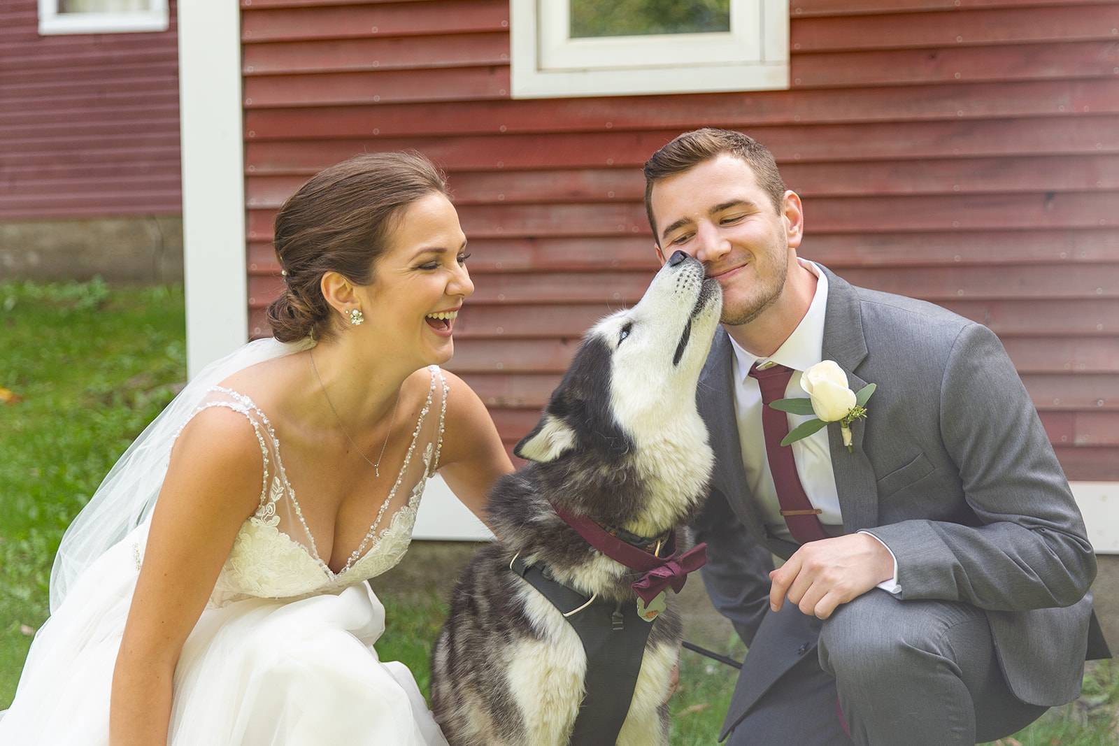 Bride and groom pose with husky dog on wedding day as dog kissing groom's face