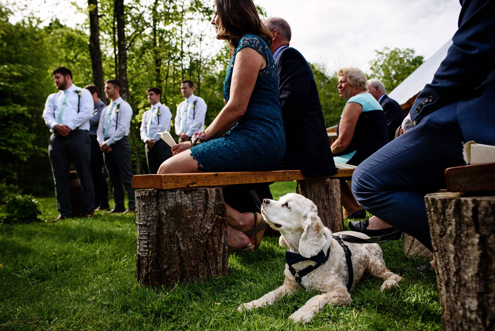 Dog lies in grass during wedding ceremony