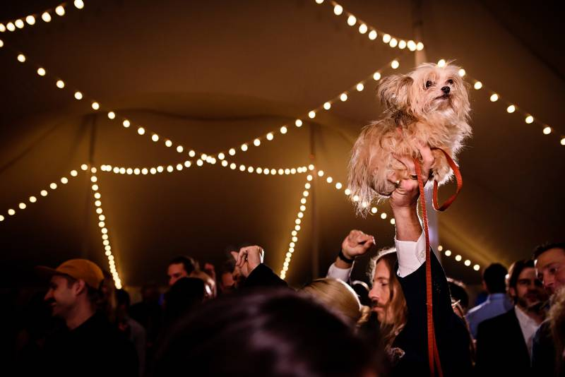 Tiny dog held in the air during wedding reception on the dance floor