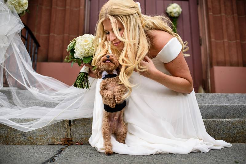 Tiny dog jumping to get close to bride on her wedding day