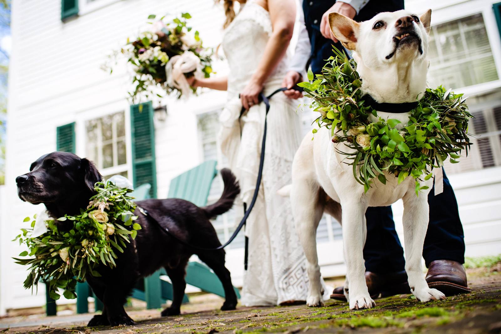Dogs wearing floral and greenery collars pose with bride and groom on wedding day