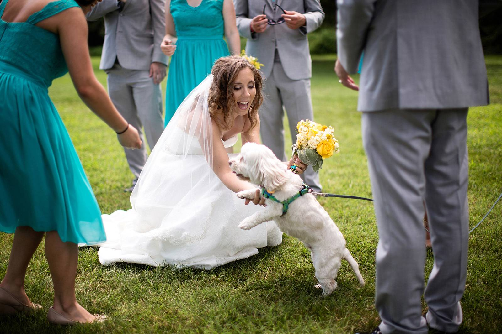 Bride greeting dog on wedding day
