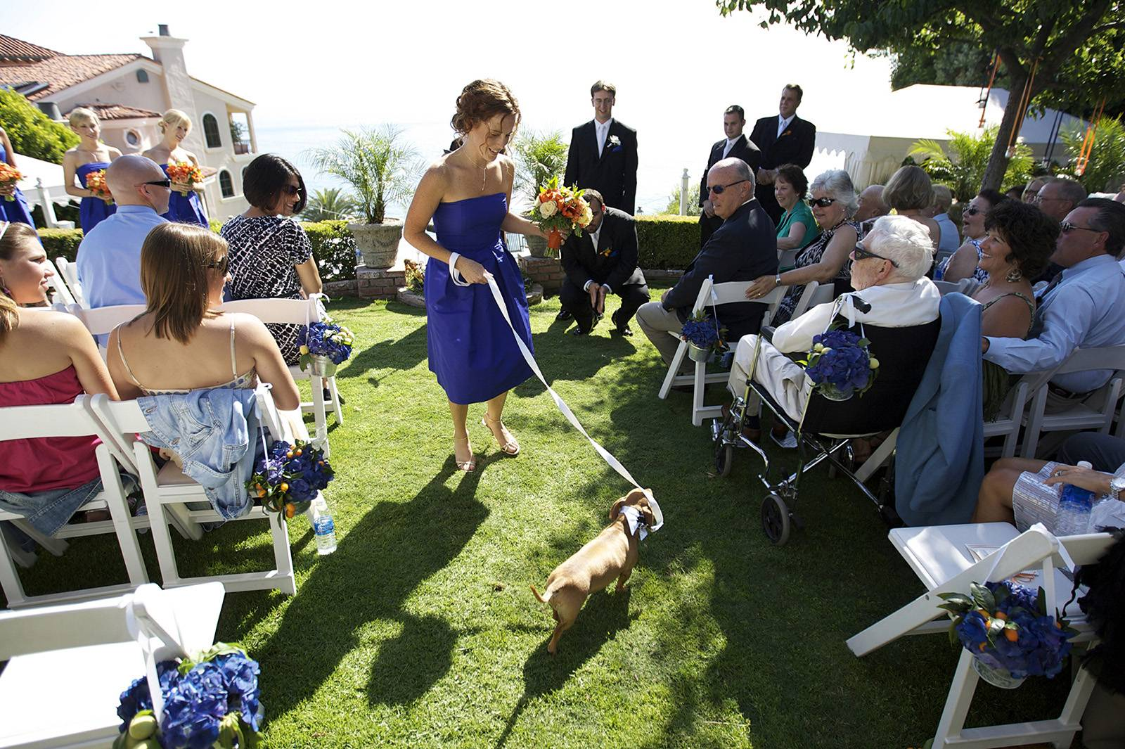 Bridesmaid walking dog down the aisle at summer wedding